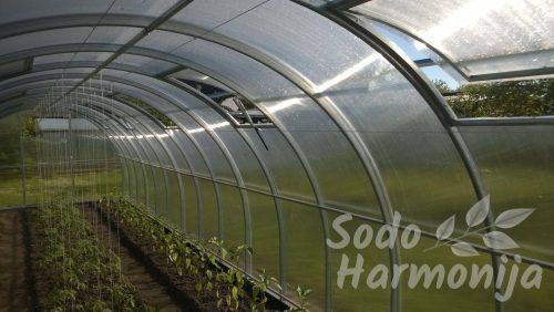 Šiltnamis su augalų pririšimo rinkiniais